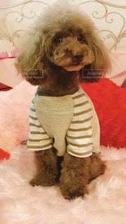 犬の隣に座っている小さな黒いテディベアの写真・画像素材[1262538]