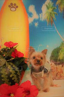 それからぶら下がっている犬の写真・画像素材[1312816]