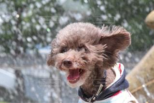 空気中のジャンプ犬の写真・画像素材[1326772]