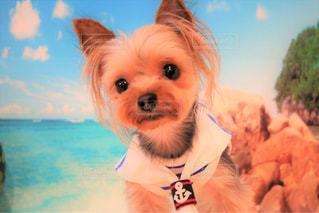 着ぐるみを着た犬の写真・画像素材[1329614]