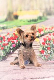 草の中に座っている犬の写真・画像素材[1370213]