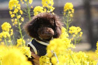 黄色の花とテディベアの写真・画像素材[1370221]