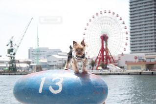 水のボートの犬の写真・画像素材[1399561]