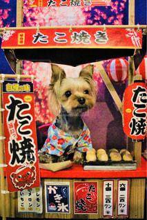 本の上に座っている犬の写真・画像素材[1408988]