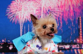 着ぐるみを着た犬の写真・画像素材[1408999]