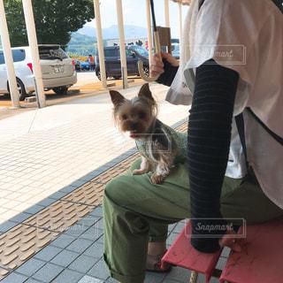 犬と一緒にベンチに座って猫の写真・画像素材[1425991]