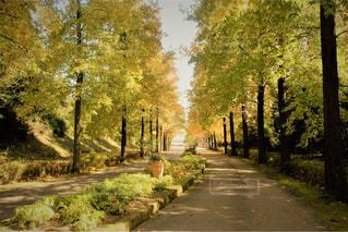 道の端に木のパスの写真・画像素材[1600436]