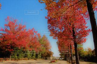 近くの木のアップの写真・画像素材[1600437]