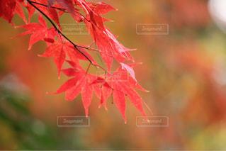 近くの植物のアップの写真・画像素材[1600438]