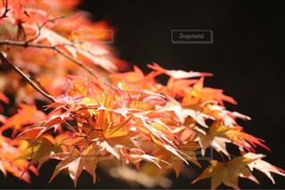 近くの植物のアップの写真・画像素材[1600450]