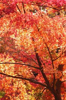 木の上に座ってピザの写真・画像素材[1600458]