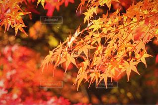 近くの花のアップの写真・画像素材[1643728]