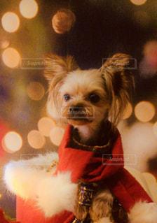 着ぐるみを着た犬の写真・画像素材[1672793]