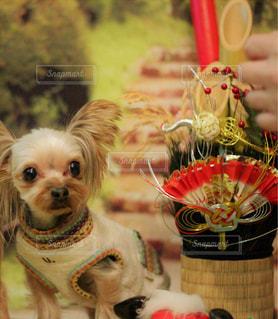 テーブルの上に座っている犬の写真・画像素材[1734134]
