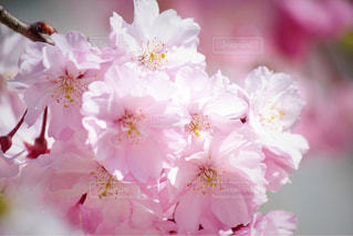 近くの花のアップの写真・画像素材[1794257]