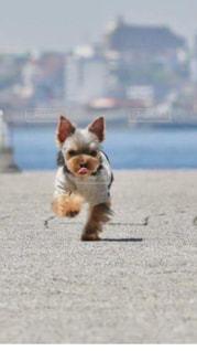砂浜の上に座っている犬の写真・画像素材[1825460]