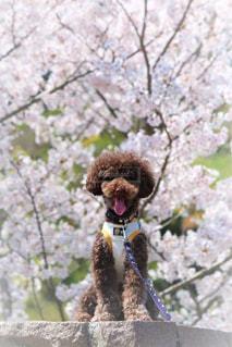 春,桜,花見