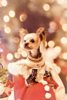 着ぐるみを着た犬の写真・画像素材[1876642]