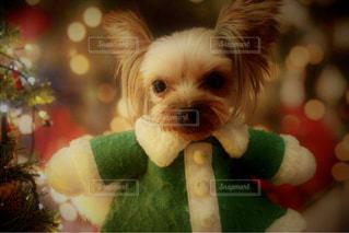彼の口からぶら下がっている犬の写真・画像素材[2105097]