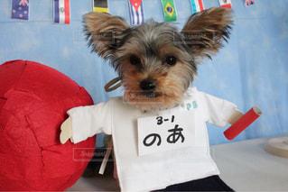 コスチュームを着ている犬の写真・画像素材[2105200]