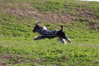 犬がフリスビーを口にくわえているの写真・画像素材[2110159]