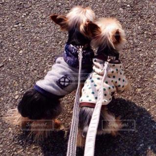 犬の写真・画像素材[2145037]