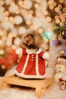 犬の写真・画像素材[2165837]