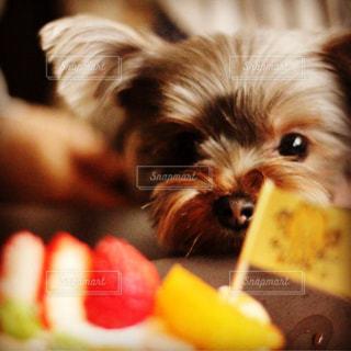 小さな犬を抱く手の写真・画像素材[2259085]