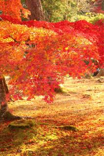 森の木の写真・画像素材[2512800]
