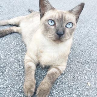 地面に横になっている猫の写真・画像素材[1283218]