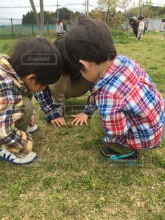 男の子,兄弟,チェックシャツ,穴の中に何かが…,虫発見