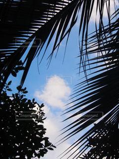 南国っぽいの写真・画像素材[1127094]