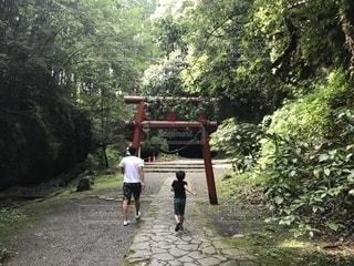 自然,神社,親子,後ろ姿,人物,人,後姿,少年,男の子