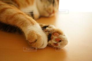 テーブルの上に横たわる猫の写真・画像素材[726976]