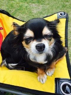犬の写真・画像素材[24047]