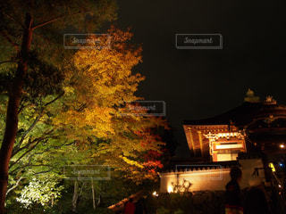 夜の街の景色の写真・画像素材[870747]