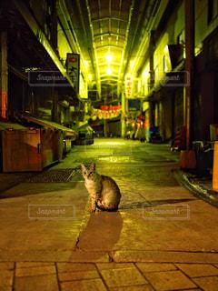歩道の上に座っている猫の写真・画像素材[1261932]