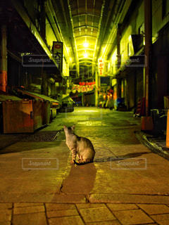 猫の写真・画像素材[1261939]