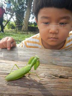 自然,夏,子供,カマキリ,夏休み,虫とり