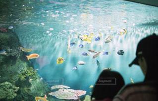 海,水族館,レトロ,フィルム,雰囲気,カラー,水槽,フィルム写真,フィルムフォト