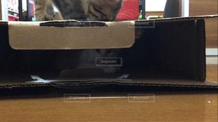 猫の写真・画像素材[659422]