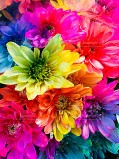 紫色の花でいっぱいの花瓶の写真・画像素材[2342595]