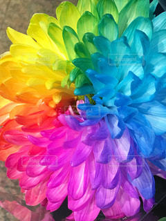 花のクローズアップの写真・画像素材[2342626]
