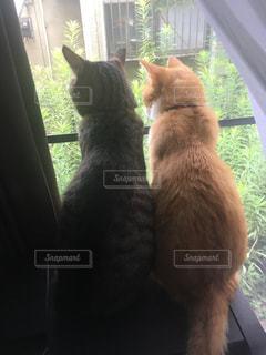 猫の写真・画像素材[2561153]