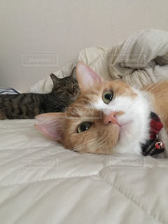 猫,動物,屋内,かわいい,オレンジ,寝転ぶ,ペット,人物,蝶ネクタイ,遠近法,ネコ,ベッド,ネコ科の動物