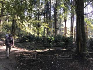 フォレスト内のツリーの横に立っている人の写真・画像素材[770233]