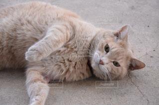 地面に横になっている猫の写真・画像素材[983186]