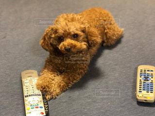 犬とリモコンの写真・画像素材[1189641]