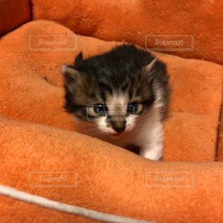 白い面の上に横たわる猫の写真・画像素材[1197431]
