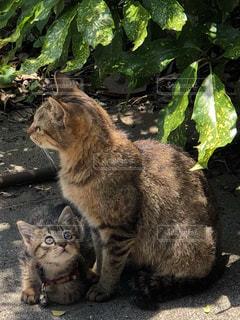 汚れフィールドの上に座っている猫の写真・画像素材[1264286]